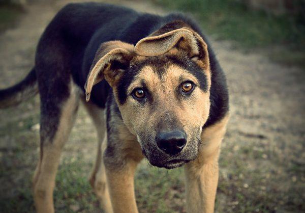 Mơ thấy chó cắn - Giải mã giấc mơ liên quan đến chó