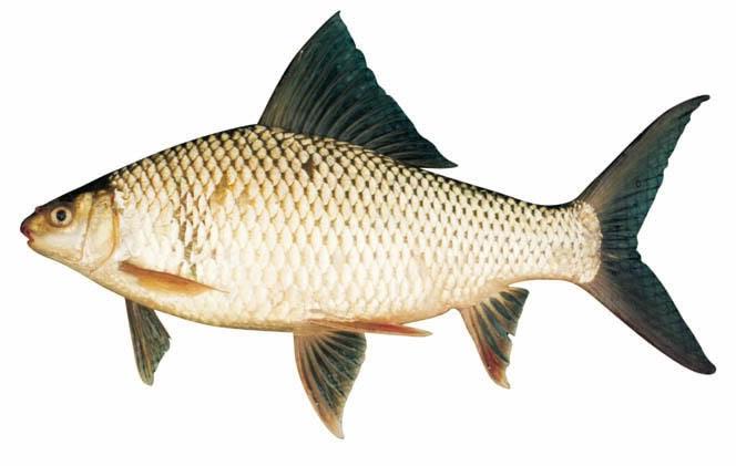 nằm mơ thấy cá đánh đề con gì
