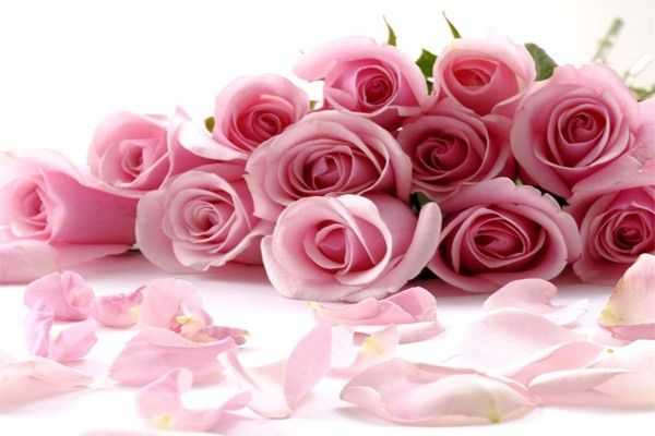 nằm mơ thấy hoa hồng có điềm báo gì