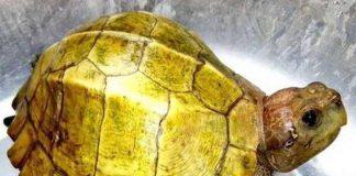 Giải mã giấc mơ thấy rùa đánh con gì dễ trúng?