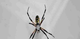 Mơ thấy nhện có ý nghĩa gì, nên đánh số nào?