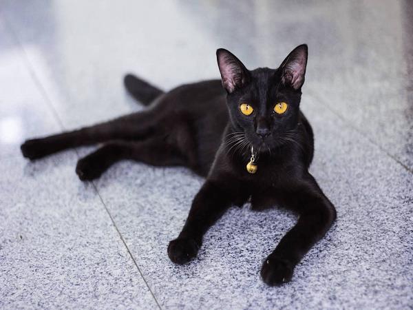 Mơ thấy mèo là điềm lành hay dữ - Đánh con số nào?