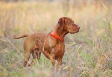 Mơ thấy chó điềm báo dữ hay lành - Đánh con số nào?