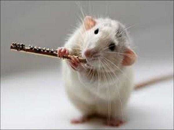 Giải mã giấc mơ con chuột đánh con bao nhiêu trong kết quả xổ số