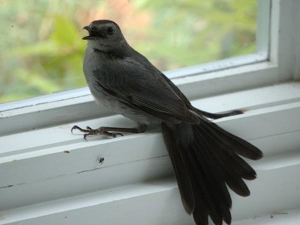 mơ thấy chim khách